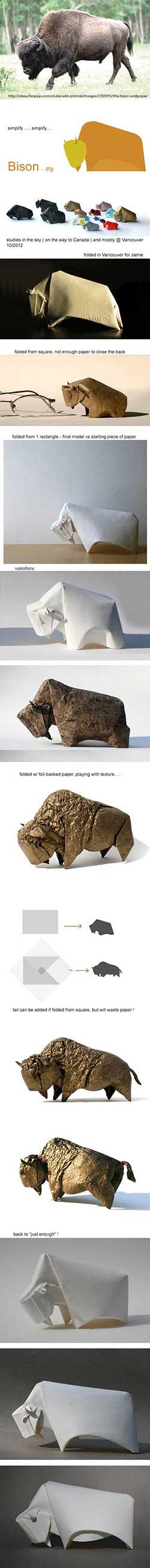 bison evolution